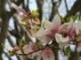DC Cherry Blossoms 2010