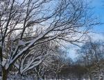 Snowmageddon 2010 - 74